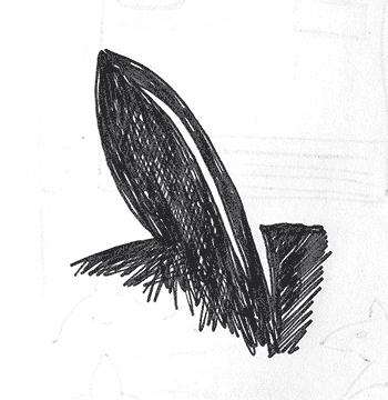 Quick Fox Ear Close-up